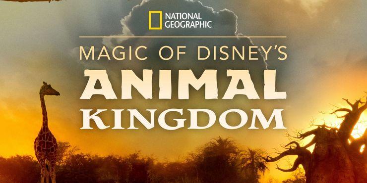 serie animal kingdom