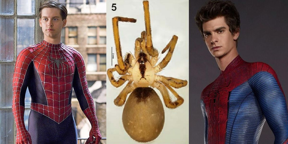who is spider man actor